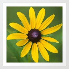 Rudbeckia Flower Art Print