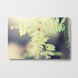 The smallest leaf Metal Print