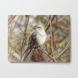 Mockingbird 2 Metal Print
