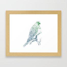 Mr Kereru, New Zealand wood pigeon Framed Art Print