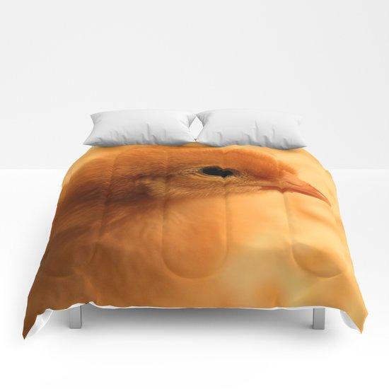 Fuzzy! Comforters