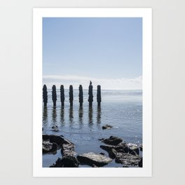 Cormorant sitting on breakwater at sea, the netherlands, travel photography print Art Print