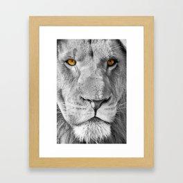 Lion Male Portrait CK Framed Art Print