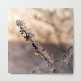 cold day in january Metal Print