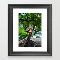 At the Zoo Framed Art Print