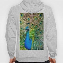 Beautiful Peacock (Color) Hoody