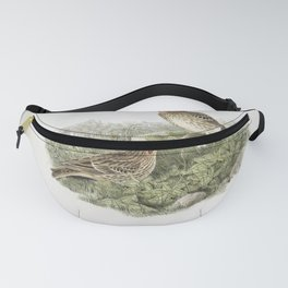 136 Anthus cervinus. Red throated Pipit Fanny Pack