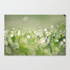morning dew no.1 Canvas Print