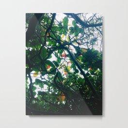 skylight Metal Print