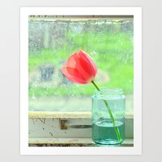 Tulip in the window Art Print