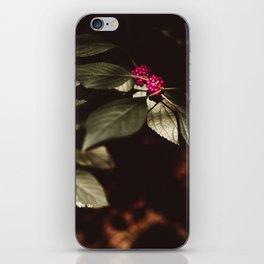 pinkberry iPhone Skin