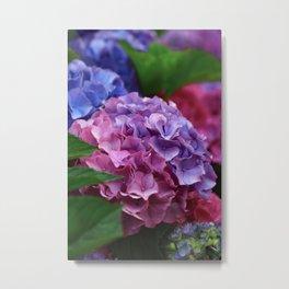 Colorful Rose Blue Lilac Hydrangea Hortensia Flower Metal Print