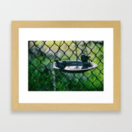Bird feed plate Framed Art Print