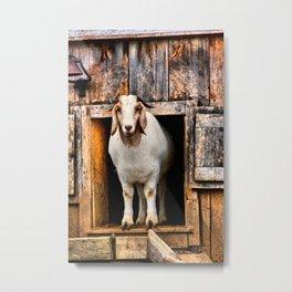 Goat Standing in Barn Loft Doorway Metal Print