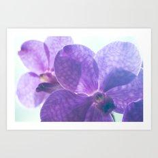 Orchid Vanda 82 Art Print