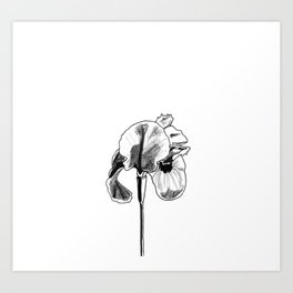 Desert Iris Art Print