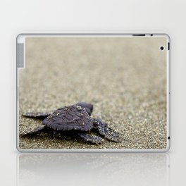 Olive Ridley Hatchling Laptop & iPad Skin