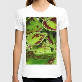 Coleus plants#2 T-shirt