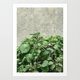Green Plants Against Concrete Wall Art Print