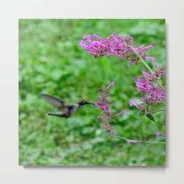 Feeding hummingbird 48 Metal Print