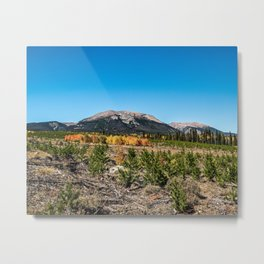 Treeline Mountain Top // Long Range Landscape Photograph Rustic Forest Fall Colors Metal Print