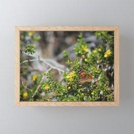 Painted Lady in Coachella Valley Wildlife Preserve Framed Mini Art Print