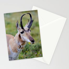 Antelope Nibble Stationery Cards