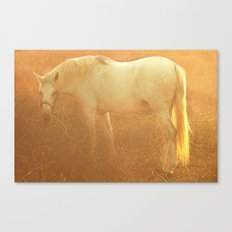 Horse and autumn field Canvas Print