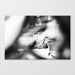 Stalked Canvas Print