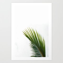 Single Palm Leaf Art Print