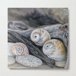 Shark's eye shells and driftwood Metal Print