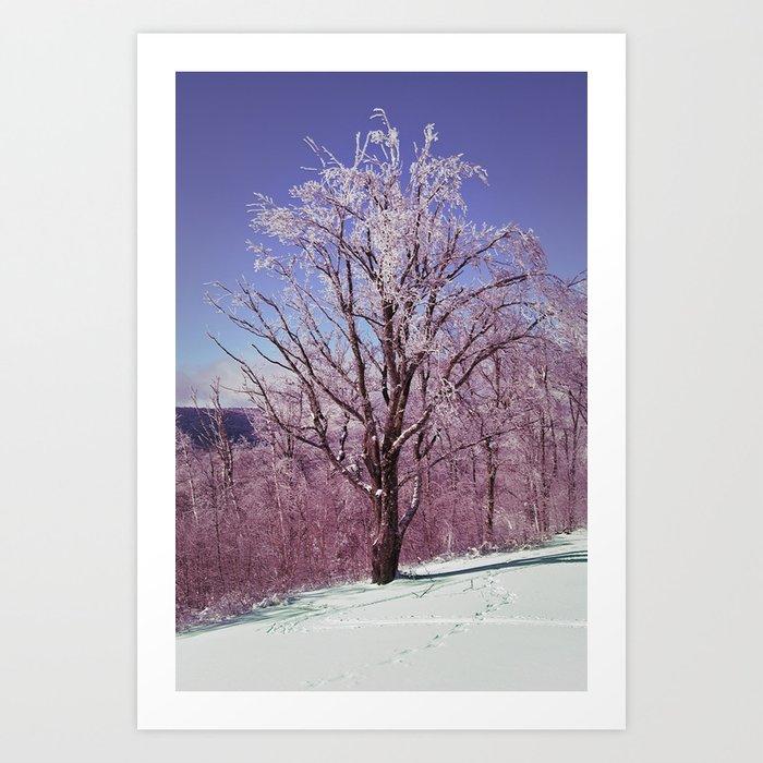 Winter Maple Art Print
