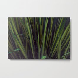 Hidden in the Grass Metal Print