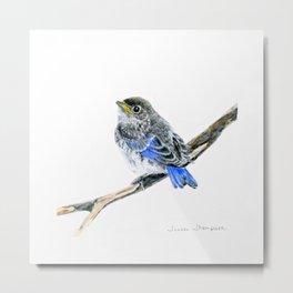 Blue Belle by Teresa Thompson Metal Print