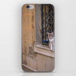 Cat in the street of Venice Italy iPhone Skin