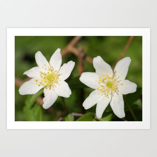 Two White Star-Shaped Flowers Art Print