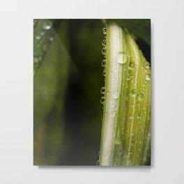 Garden Raindrops Metal Print