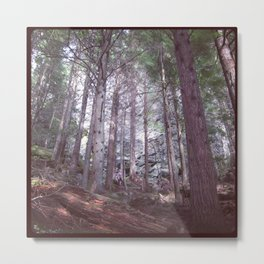 Pacific Northwest Forest Metal Print