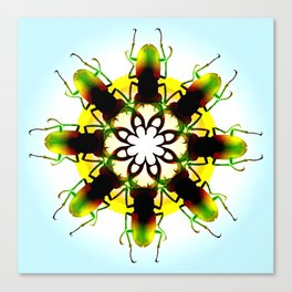 flower beetles Canvas Print