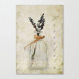 Lavandula / Lavander Canvas Print