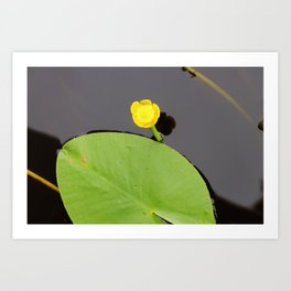 Yellow waterlily with lily pad Art Print