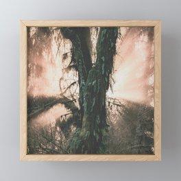 Rainforest Revelation Framed Mini Art Print