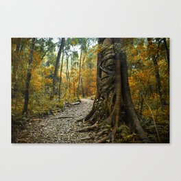 Bunya treasure Canvas Print