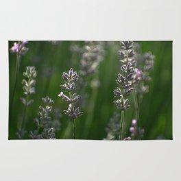 Lavender Buds and Bug Rug