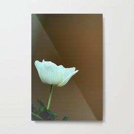 White Anemone Metal Print