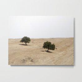 The holm oak Metal Print