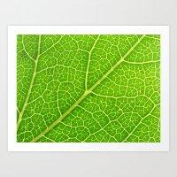 Green Leaf Veins 04 Art Print