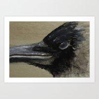 Study of a Crow - in Gouache Art Print