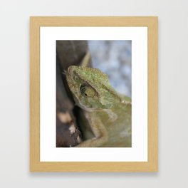 Wild Chameleon In Green Shades Framed Art Print