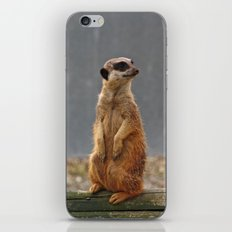 Meerkat No.1 iPhone & iPod Skin